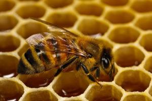 сон на ульях пчёл